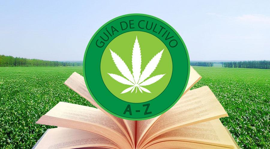 Cultivo de marihuana plantar marihuana paso a paso - Como plantar marihuana en casa paso a paso ...