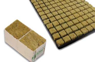 Germinar semillas de marihuana con lana de roca