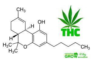 thc marihuana cannabis