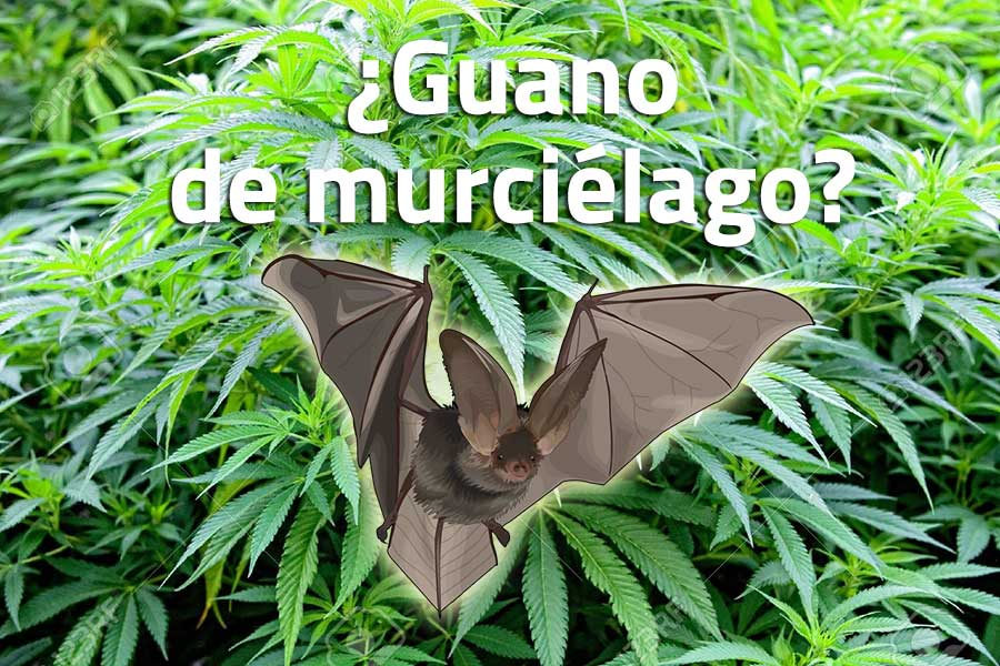 Guano de murciélago