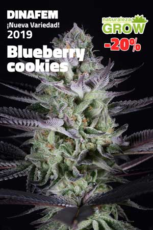 Blueberry cookies 2019