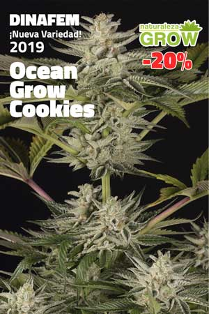 Ocean Grow Cookies