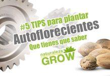 5 Consejo para plantar autoflorecientes