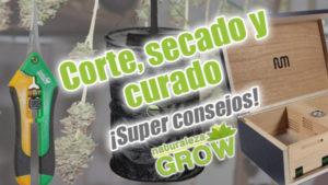 corte secado curados marihuana