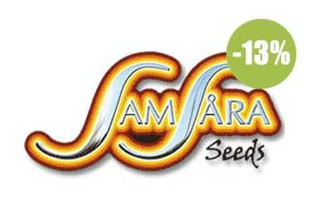 samsara seeds autofloreceintes