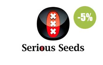 serious seeds regulares