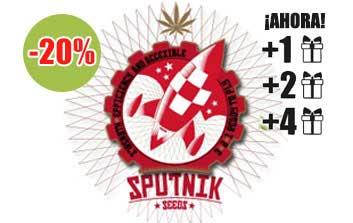 sputnik seeds autofloreceintes