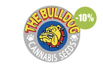 the bulldog seeds seeds regulares
